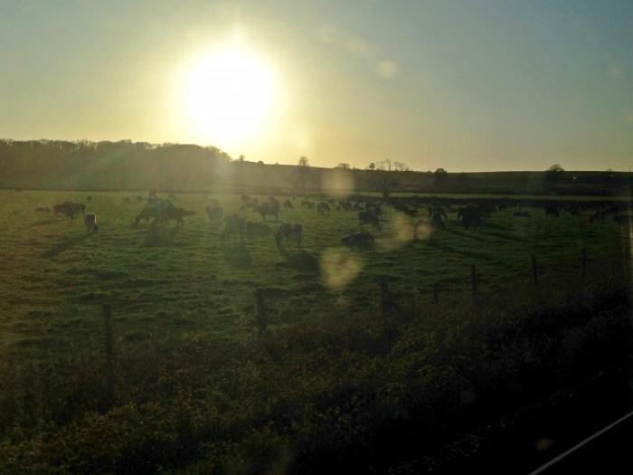 14.FarmlandWorcesterPSv2